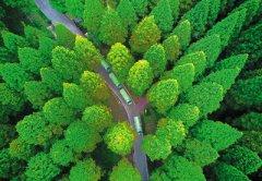 森林旅游:绿色巨伞撑起