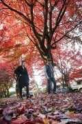 Red maple scenery in Vancouver, Canada