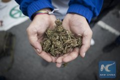 Canada's legalization of cannabis use draws mixed reactions
