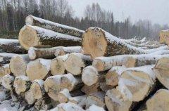 """俄罗斯发布这一项""""禁令"""",禁止向中国出售木"""