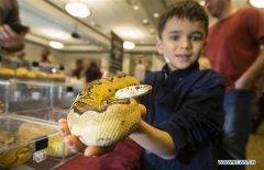 Highlights of 2019 Toronto Reptile Expo