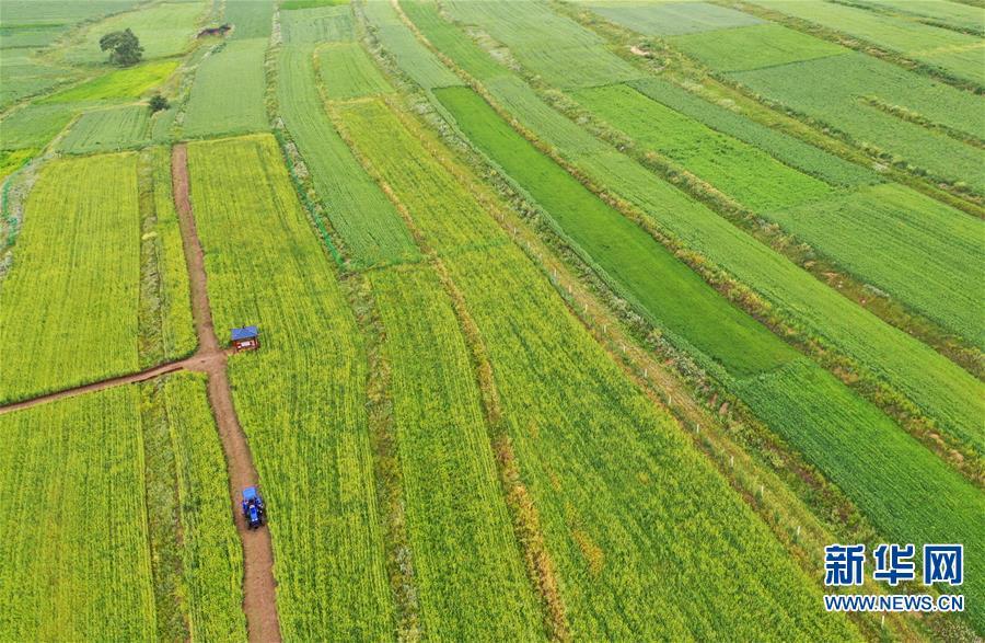 (经济)(3)张北坝上打造田园综合体
