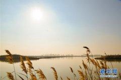 内蒙古托克托县:黄河两