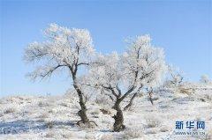 内蒙古锡林郭勒草原白雪