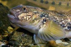 研究显示:鱼鳍触