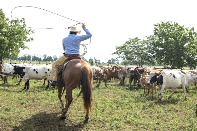 Meat prices expected to rise due to impact of drought on ranches