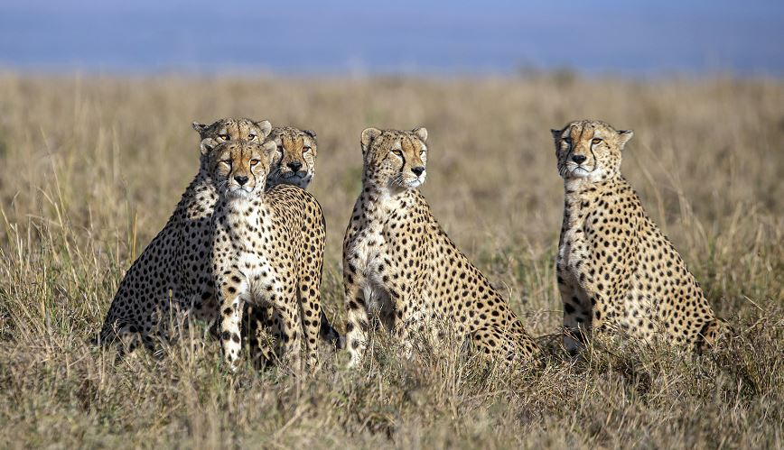 African campaigner calls for protection of wildlife habitats amid threats