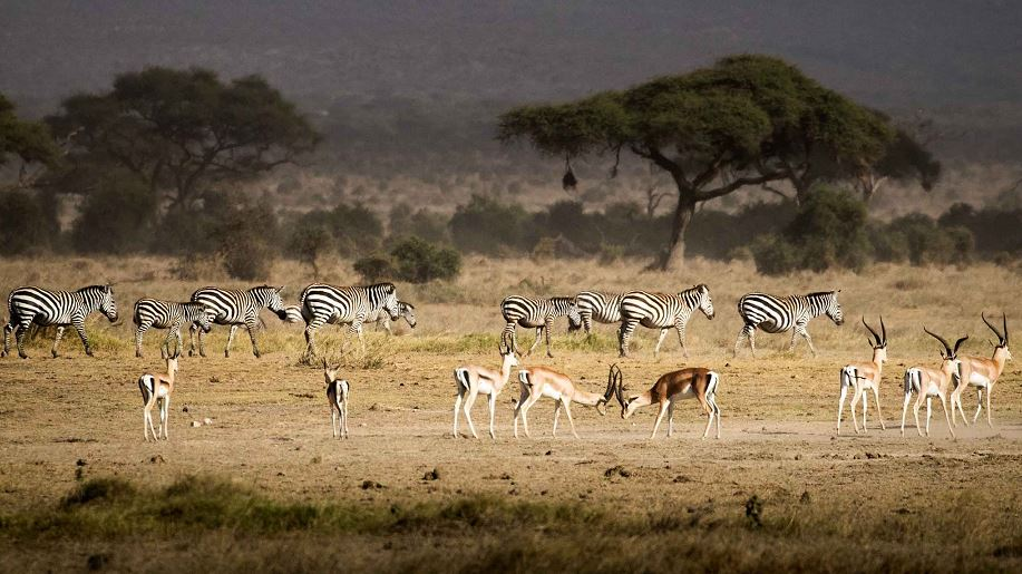 African campaigners say social media, airlines fuelling wildlife trade